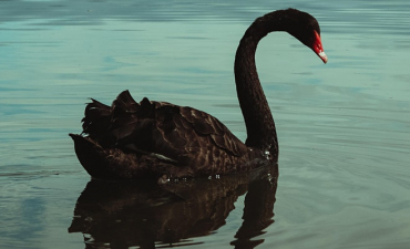 Black Swans – COVID and other things we cannot predict